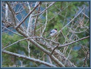 Dec24_03_MtTakao_BirdRC