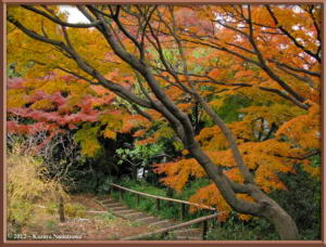 Dec2nd_86_TonogayatoGardens_AutumnColorsRC