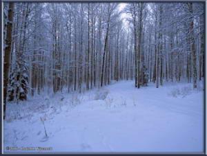 Dec2_08_SnowyYardRC