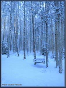 Dec2_11_SnowyYardRC