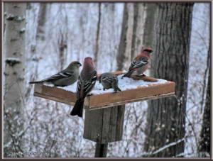 Nov30th_015_BirdsRC