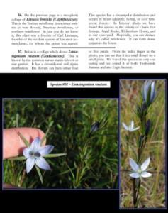 LinnaeaBorealisBookPage2RC