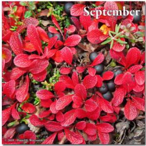 Aug26_36Crop_USCreekRd_BerryPicking_BearberryRC