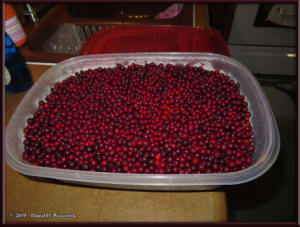 Aug28_1_LingonberriesFromNomeCreekRC