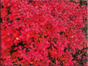 Sept17_07_LingonberryHarvest_USCreekRdRC