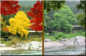 Mitake_TamaRiv_Fall_SummerRC