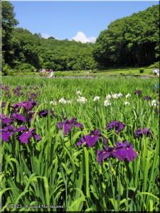 Jun1_Fukiage_Iris_Garden_Ome06RC.jpg