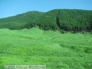June12th_Hakone_Sengokuhara002_PampasGrassFieldRC.jpg