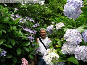 June19th_TakahataFudou028_Hydrangea_DanRC.jpg