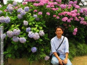 June20_HonDoTemple_Hydrangea79_KazuyaRC.jpg