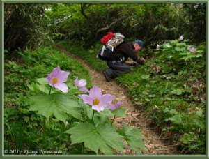 June18th_MtAkitakomagatake272RC