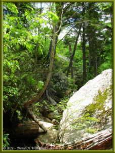 June24_047_MtMizugakiClimb_SceneryRC