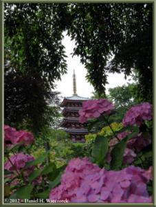 Jun24_89_HonDoTemple_Hydrangea_PagodaRC