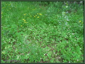 June27_23_WildStrawberryRC