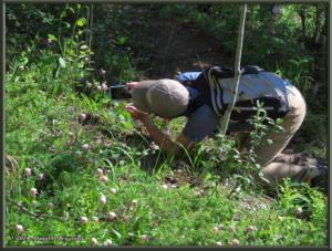 June9_57_UpperGrapefruit_CypripediumGuttatum_KazuyaRC