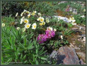 June9_29_BisonGulch_FlowersRC