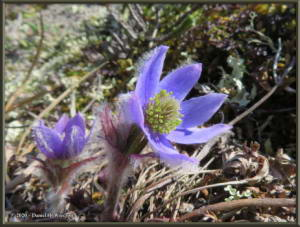 May30_02_EagleSummit_AnemoneMulticepsRC