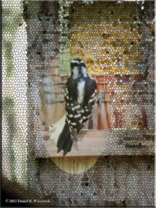 Jun24_14_Woodpecker_RC