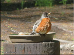 June7th_012_Home_Robin_RC