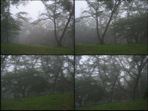 Forest Movie, With Cuckoo Bird Calling - May 23 (5.82 MB AVI File)