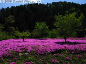 May04_Mitsutouge_DownTrail_Colors02RC.jpg