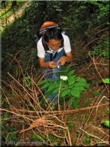 May05Hikage_Paeonia_japonica_Kazuya12RC.jpg
