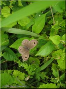 May13Koremasa11_ButterflyRC.jpg