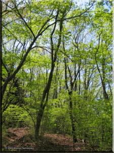 May4KoriMitake05_GreenRC.jpg