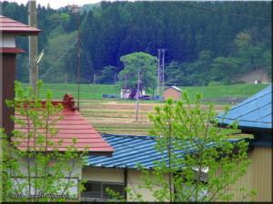 May05_Tsuya_Station04_BiggestWillowTreeRC.jpg