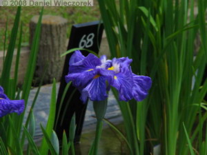 May24_Horikiri_IrisGarden_Iris02RC.jpg