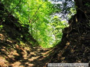 May10th_MitakeOotaruPass039s_ForestRC.jpg