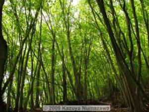 May15_KamosawaMtKumotori024_GreenRC.jpg