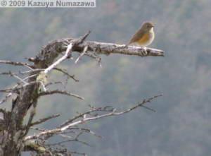 May15_KamosawaMtKumotori112_BirdRC.jpg