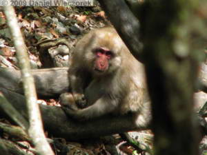 May15_MtKumotoriClimb015_JapaneseMonkeyRC.jpg