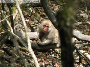 May15_MtKumotoriClimb017_JapaneseMonkeyRC.jpg