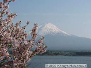 May1st_LakeKawaguchi222_MtFuji_CherryRC.jpg