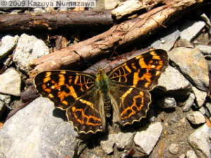 May9th_Hikage_MtTakao19_ButterflyRC.jpg