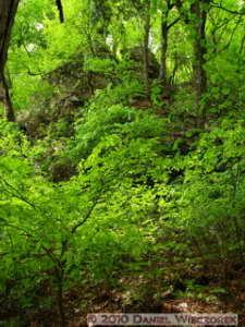 May22_Mitake_Ohtake_030_Forest_RocksRC