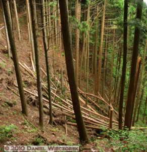 May22_Mitake_Ohtake_133_34_Stitch_BlowdownRC