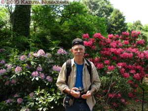 May8thJindaiBG023_Rhododendron_DanielRC