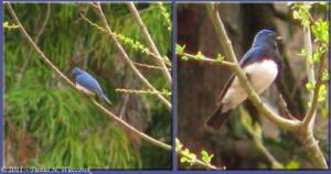 May05_038_039_Funagata_BluebirdRC
