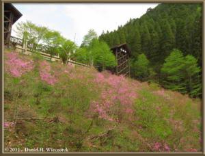 May11_01_ItsukaichiArea_ForestCenter_RC