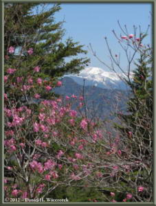 May_19_68_ClimbingMtMaeKesamaruAzalea_RC