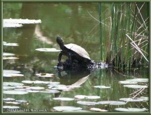 May25_12_JindaiBG_TurtleRC