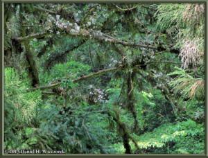 May26_35_MtTakao_Dendrobium_moniliformeRC