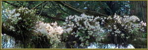 May26_MtTakao_55_56_57_58_CylinCropSIP_PanoramaRC