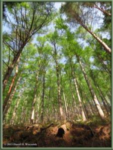 May02_03_MtKurodake_ForestSceneryRC