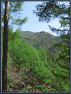 May02_56_MtKurodake_ForestSceneryRC
