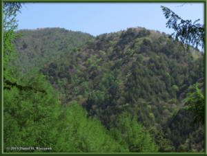 May02_58_MtKurodake_ForestSceneryRC