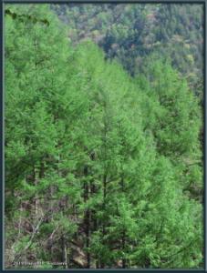 May02_60_MtKurodake_ForestSceneryRC